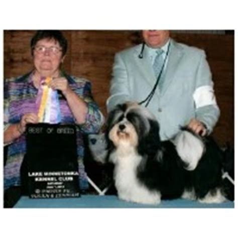 kansas havanese havanese breeders in kansas freedoglistings
