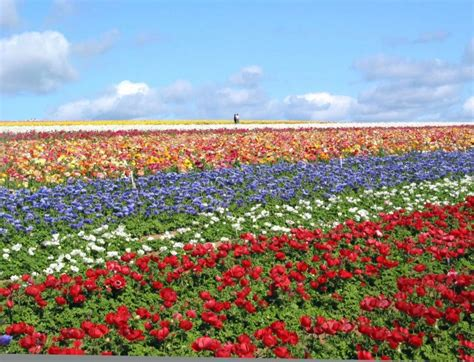 flower garden carlsbad flower garden carlsbad carlsbad flower gardens