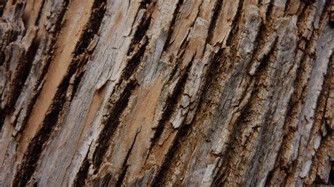 tree bark mlewallpapers tree bark i