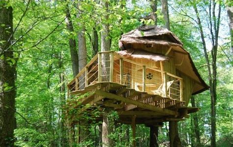 Treehouse Cottages Tree House Cottage Small Tree Cottages The Way To Travel And Sleep Tourism