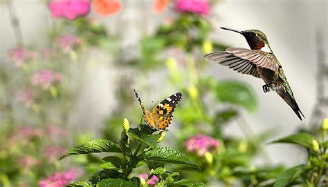plant a butterfly hummingbird garden welcome wildlife