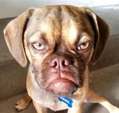 jj s dogs earl the grumpy the new even crankier grumpy cat the gossip
