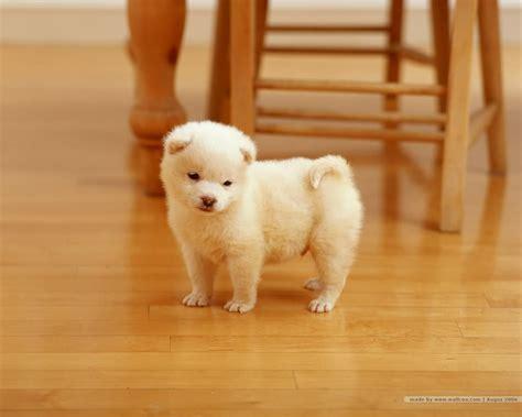Boneka Kucing Imut Lucu Terbaru gambar anak anjing lucu imut terbaru distro dp bbm