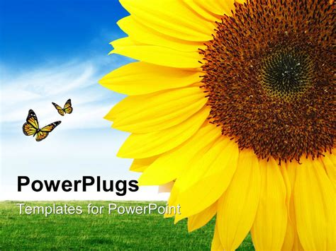 powerpoint template a sunflower with a number of