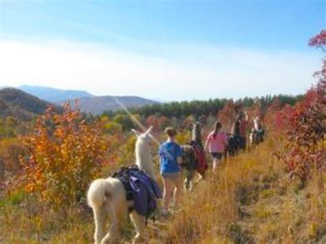 lua the llama and the mountain of books smoky mountain llama treks day tours sevierville tn