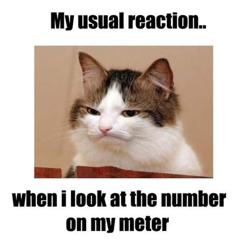 Diabetes Cat Meme - type 1 diabetes memes quotes pinterest