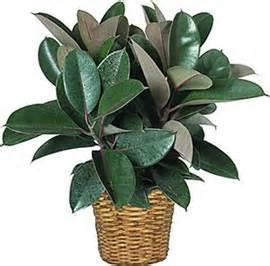types of indoor plants decorative indoor house plants decoration ideas