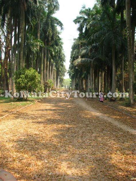 Gardens Kolkata by Botanical Gardens At Shibpur Kolkata Sightseeing