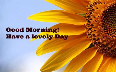 good morning   lovely day pictures
