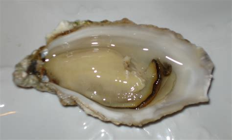 Kerang Oyster Consumers Warned To Avoid Oysters From Area 1642 In