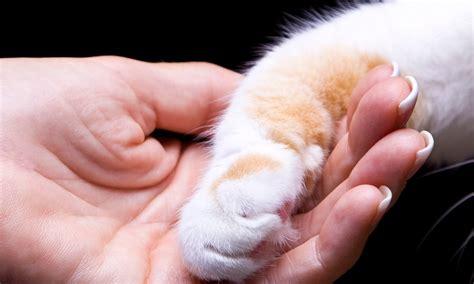 best friends veterinary saying goodbye open best friends veterinary