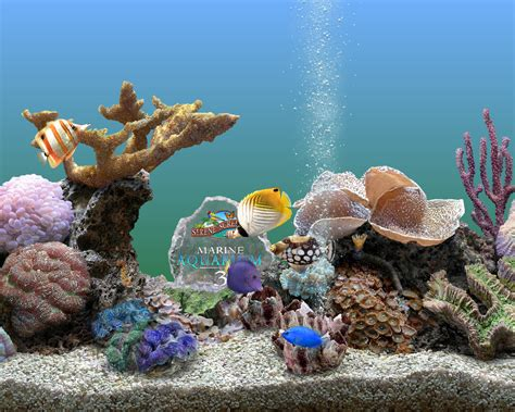 serenescreen marine aquarium download saltwater fish screensaver