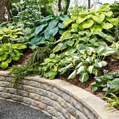 shade garden ideas hostas photograph hostas plants on a sl