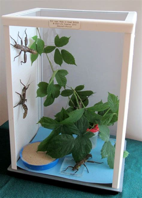 elc stick insect cage  inches  cm tall