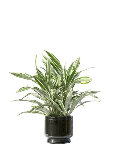 office desk plants office plants a green office creating inspiring workplaces