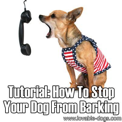 how to stop dog barking when left alone lovable dogs how to stop your dog from barking 2