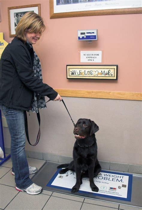 animal house vet 25 best ideas about dog kennel flooring on pinterest