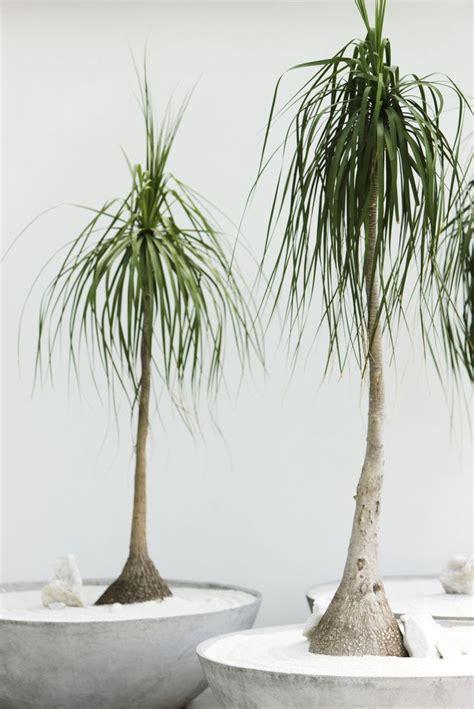 indoor plants   impossible  kill