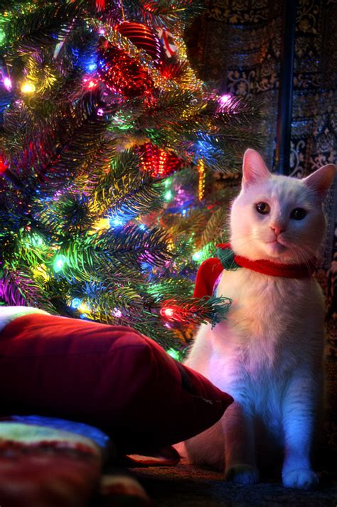 cat first seen christmas tree do you hear what i hear by justinderosa on deviantart