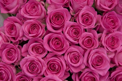 rose pattern name oca learning log just another wordpress com site