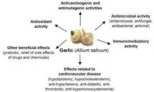 Amazing uses for garlic in your home amp garden the micro