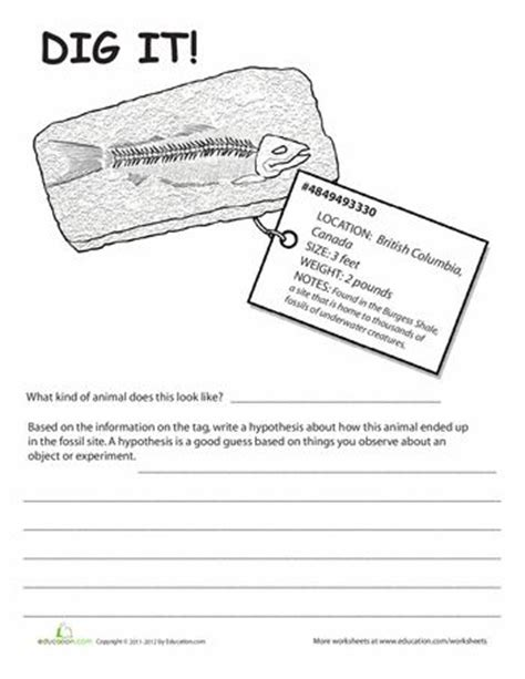 Fossil Worksheets by Fossils Worksheets