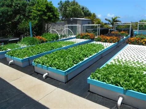 backyard aquaponics plans aquaponics is easy with our systems friendly aquaponics
