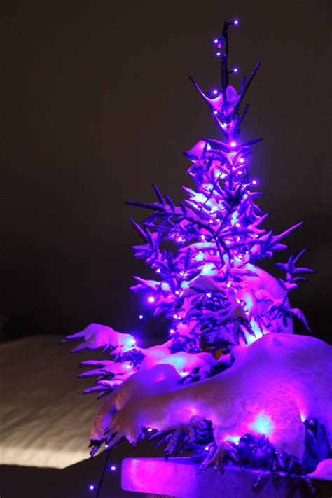 free images snow winter light night purple petal