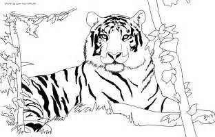 tigers colouring pages