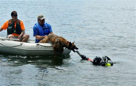 search dogs news amigo search and rescue dogs