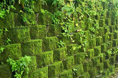 the rusty hoe how to grow moss