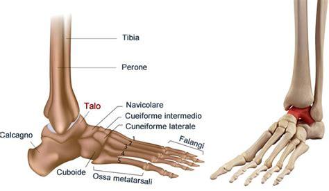 dolore al malleolo interno astragalo osso