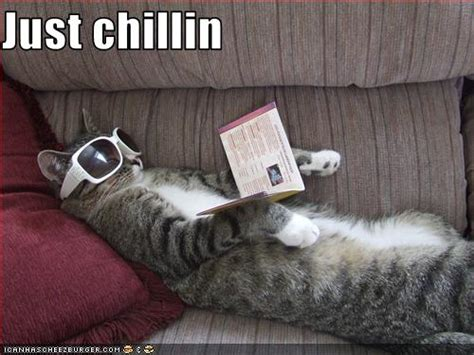 chillin cheezburger funny memes funny pictures