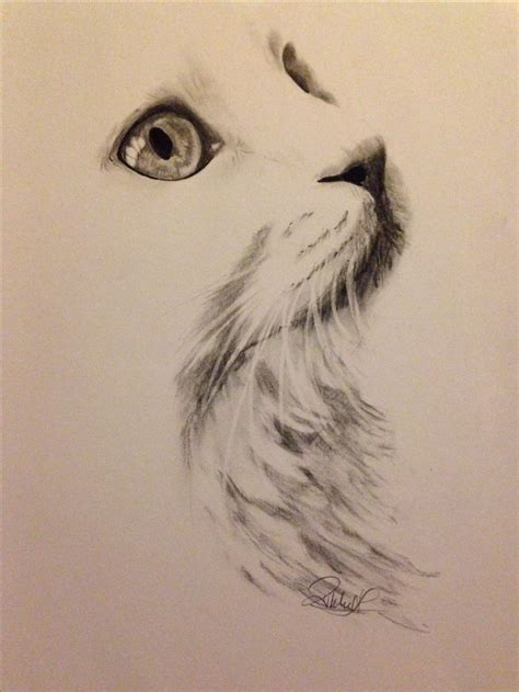 25 best drawing ideas on pinterest drawings drawing photos pencil drawings of cats drawing art gallery