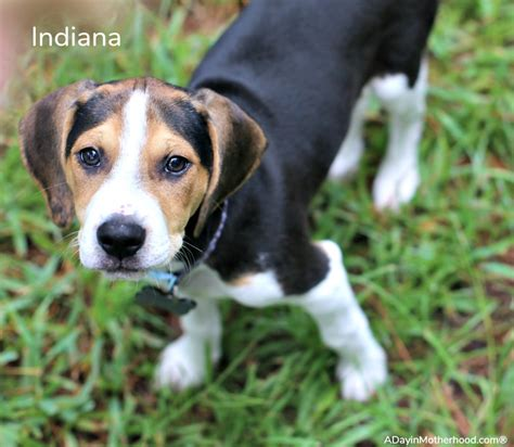 how to foster puppies why i decided to foster puppies with four dogs of my own