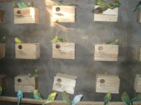 Harga Pakan Burung Jewawut salam sukses go winner berwirausaha ternak parkit