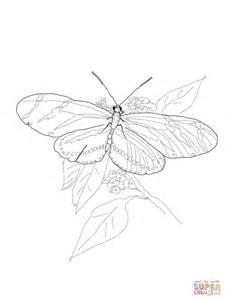 Zebra Butterfly Coloring Page | zebra longwing butterfly coloring page free printable