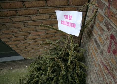 so how do i get rid of my wilting shedding christmas tree