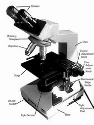 Best 25 ideas about labeled microscope find what youll love compound binocular light microscope parts ccuart Image collections