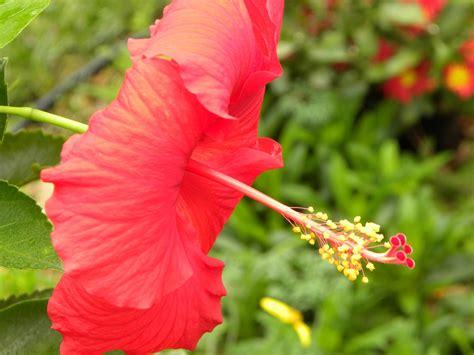 florida flowers lifeonbreckhill