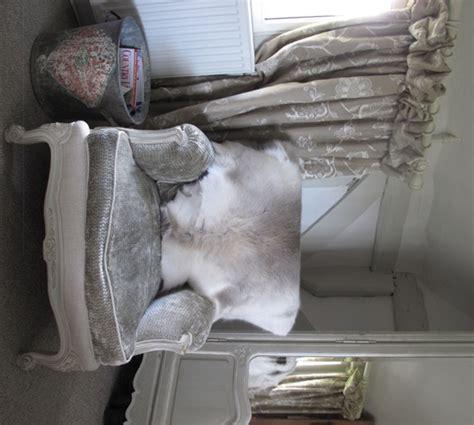 Cowhide Cushions Australia - cowhides in australia cowhide rugs cushions leather
