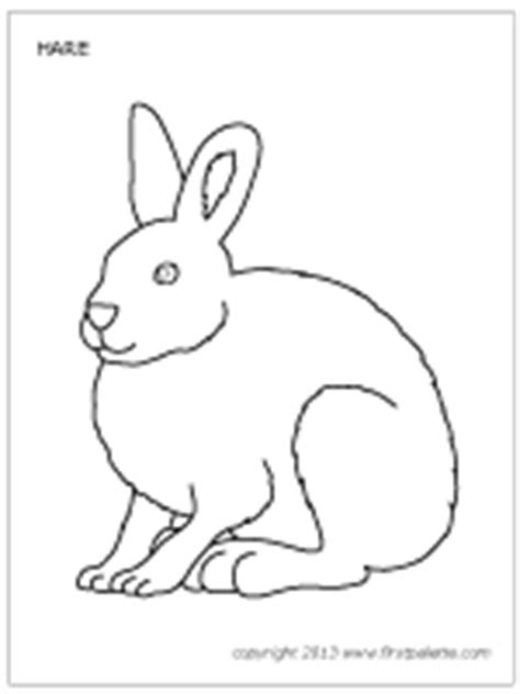 arctic hare colouring pages