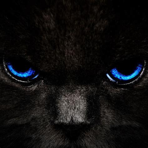 black cat  blue eyes ipad hd wallpapers high