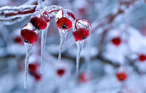 1321 best images about winter themes on pinterest winter nature backgrounds wallpaper cave