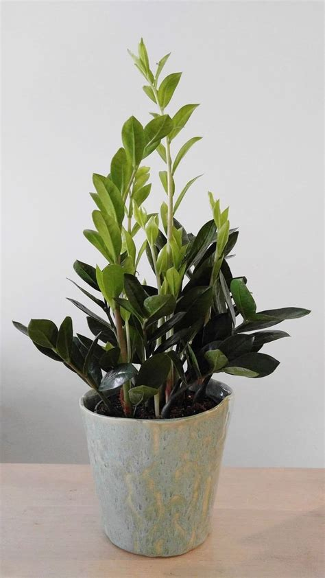 best plant for indoor low light 25 best ideas about low light plants on pinterest