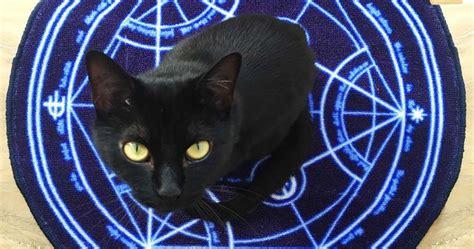 Metal Alchemist Transmutation Circle Gantungan Kunci Keychain fma transmutation circle rug shut up and take my yen