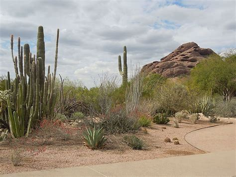 Desert Botanical Garden Admission Desert Botanical Garden In Usa Sygic Travel