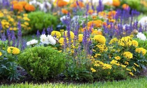 how to kill weeds in flower beds how to kill and prevent weeds in a flower bed wilson