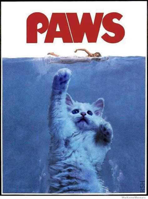 Parody Meme - the cat version of jaws weknowmemes