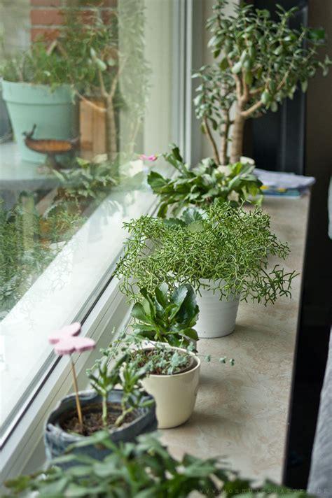 fensterbrett wohnzimmer giftig oder nicht wir sortieren zimmerpflanzen